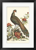 Framed Regal Pheasants III