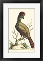 Framed Regal Pheasants IV