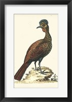 Framed Regal Pheasants V