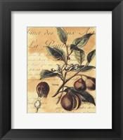 Framed Nutmeg
