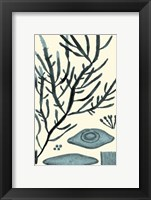 Framed Azure Seaweed III