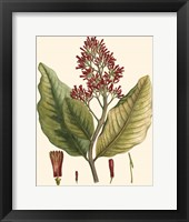 Framed Crimson Botanical II