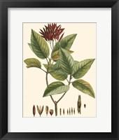 Framed Crimson Botanical IV