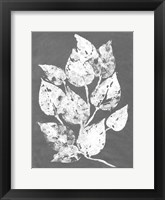 Framed Frosty Philodendron I
