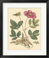Framed Blushing Pink Florals I