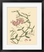 Framed Blushing Pink Florals VI