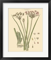 Framed Blushing Pink Florals VIII
