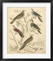 Framed Avian Habitat I