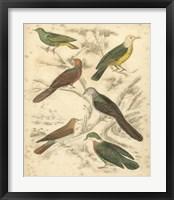 Framed Avian Habitat II