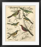 Framed Avian Habitat III