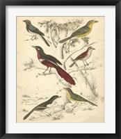 Framed Avian Habitat IV