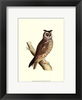 Long Eared Owl Framed Print