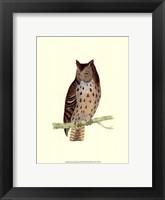 Framed Mottled Owl