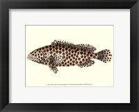 Antique Fish II Framed Print
