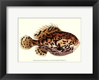 Framed Antique Fish III