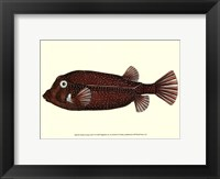 Antique Fish IV Framed Print