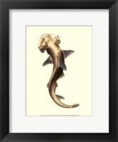 Framed Shark Tale II