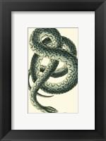 Framed Vibrant Snake III