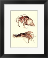 Framed Hermit Crabs I