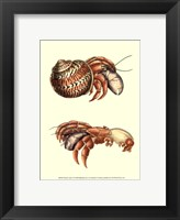 Framed Hermit Crabs II