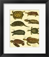 Framed Tortoise
