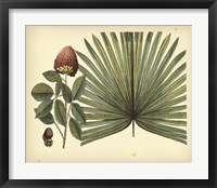 Framed Antique Brazilian Palm