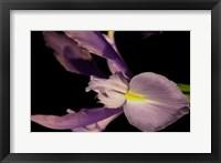 Framed Sweet Iris I