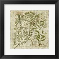 Framed Garden Verses I
