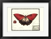 Framed Butterfly Prose I