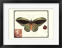 Framed Butterfly Prose II