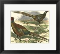 Framed Bohemian Pheasant