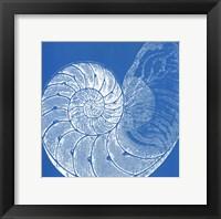 Saturated Shells IV Framed Print