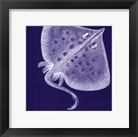 Saturated Sealife III Framed Print