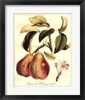 Framed Custom Tuscan Fruits IV (AO)