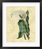 Framed Calla with background (A)