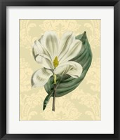 Framed Magnolia with background (A)