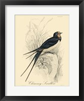 Framed Printed Chimney Swallow (A)