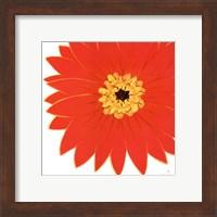 Framed Bright Blossoms I