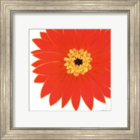 Framed Bright Blossoms I