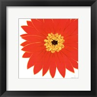 Bright Blossoms I Framed Print
