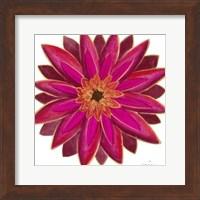 Framed Bright Blossoms III