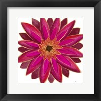 Bright Blossoms III Framed Print