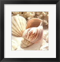 Framed Coral Shell II