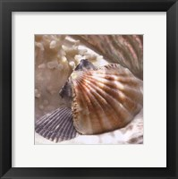 Framed Coral Shell III