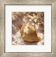 Framed Coral Shell IV