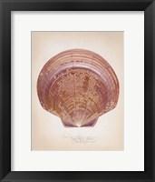 Saucer Scallop Framed Print