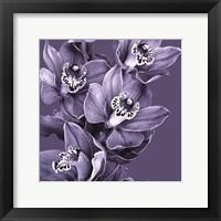 Framed Mauve Orchid #3