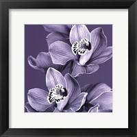 Framed Mauve Orchid #2
