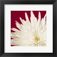 Framed Chrysanthemum, White on Dark Red