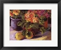 Framed Primrose ll
